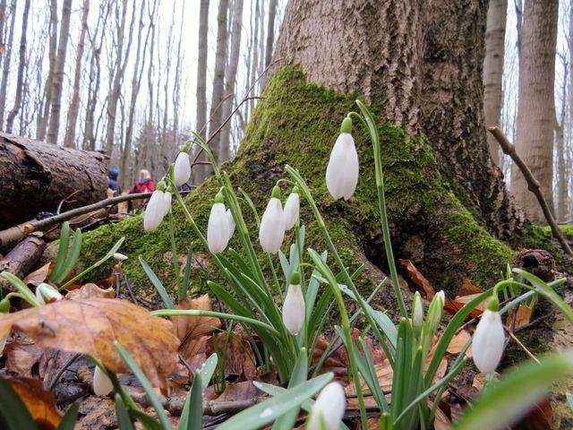 pobyt v tomto lese je přímo léčivý; www.svatosi.cz