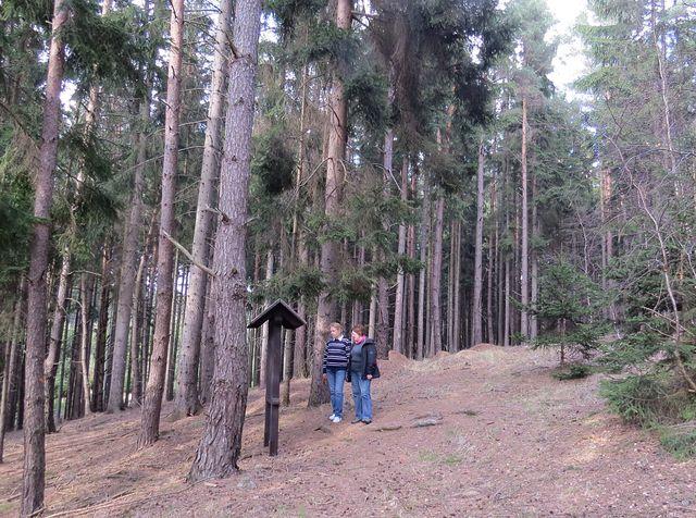 lesní naučná stezka Šebeň je 3 km dlouhá, je na ní 10 informačních panelů