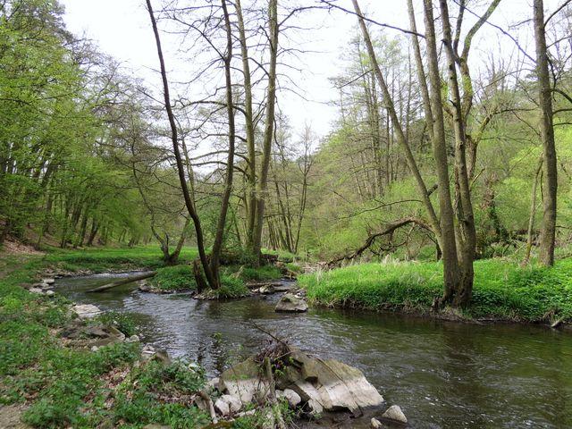na vlhkých lukách u řeky brzy rozvetou barevná jarní kvítka