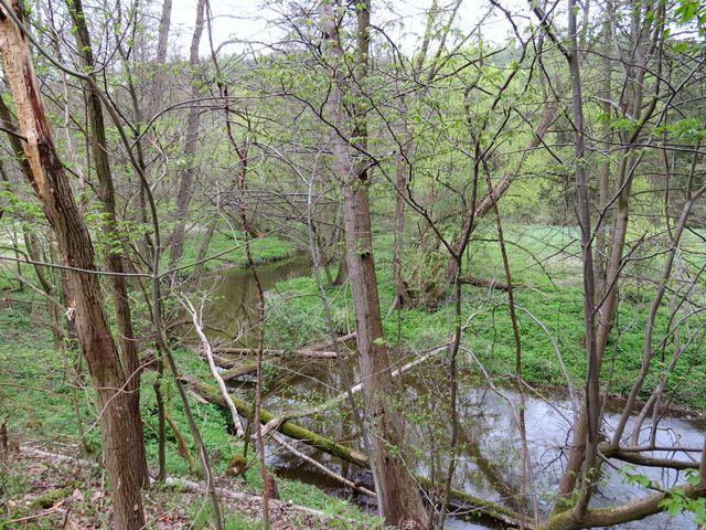 řeka obtéká lesnatý hřbet, který se jí postavil do cesty