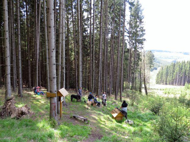 u Lesní studánky jsme zastihli skupinu irských vlkodavů se svými páníčky