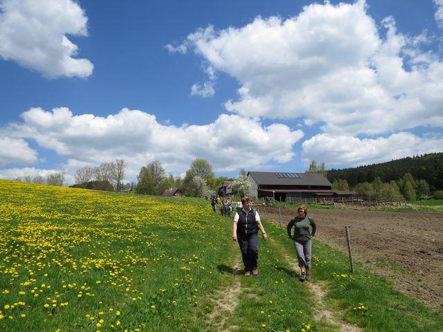 cesta vedla kvetoucími loukami