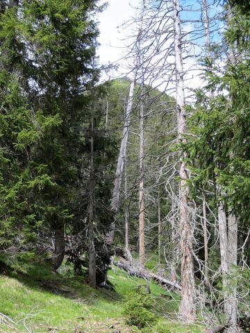 za tímto zeleným kopem je ještě jeden skalnatý - tam je Pleisspitze
