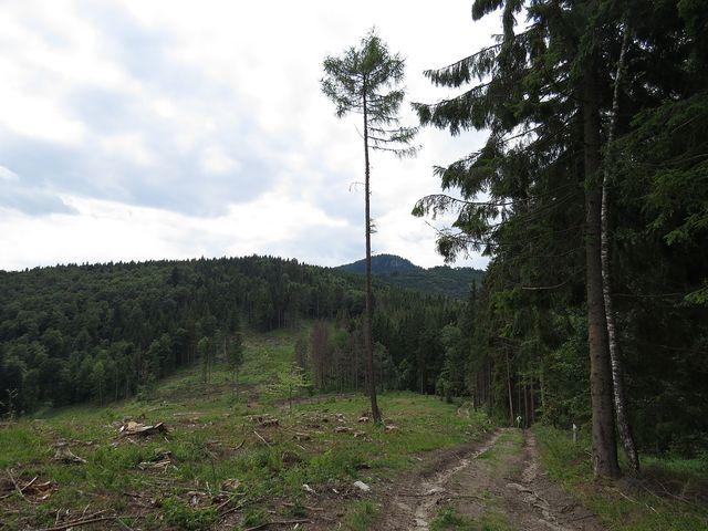 na svazích masivu Veporských vrchů jsou Klenovská blata - pramenná oblast
