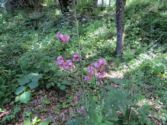 lilie zdobí rozsáhlý objekt