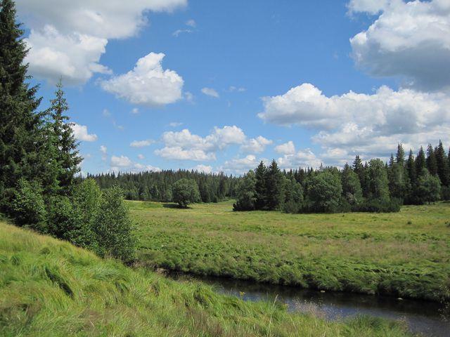 rašelinné louky kolem Roklanského potoka