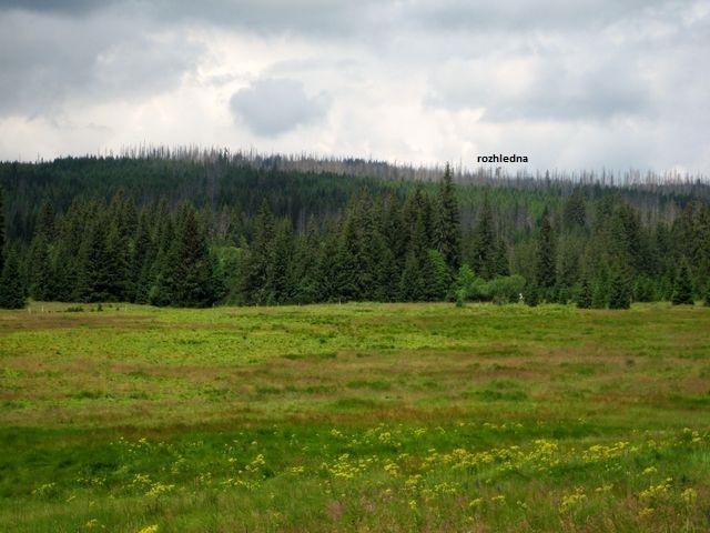 z rašeliniště u Javoří pily je kvůli mrtvému lesu vidět rozhledna na Poledníku