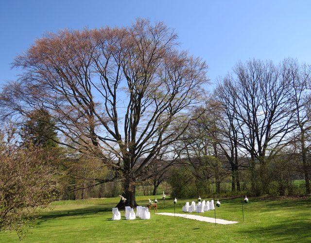 v parku se prý dnes bude konat svatba