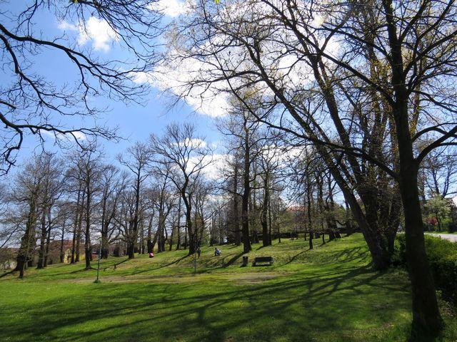 přírodní památka Kaštanka v Nasavrkách