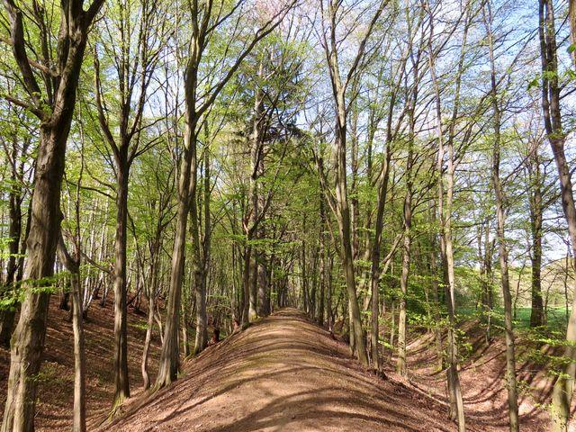 trasa naučné Keltské stezky nedaleko Hradiště