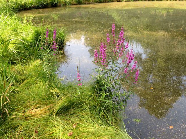 lesní rybníček - kolem vede žlutě značená pěší trasa do Trhových Svinů