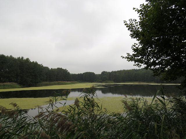 Kamenický rybník