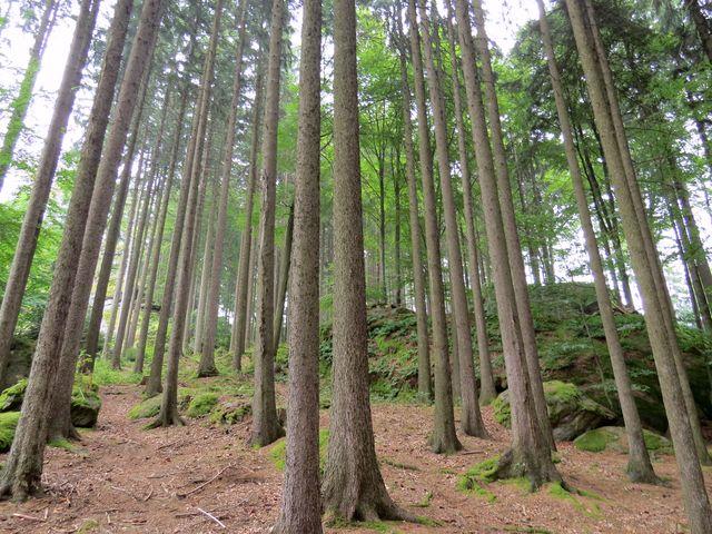 pod Čejovským kopcem (678 m); jako nejvyšší vrch Orlovských hor je též nazývaný Orlík