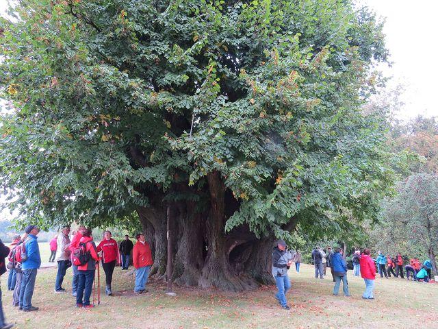 rozměrná dutina stromu je krytá stříškou