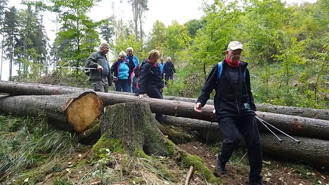 členitý terén v lesích u Oslavy; foto L. Tomáš