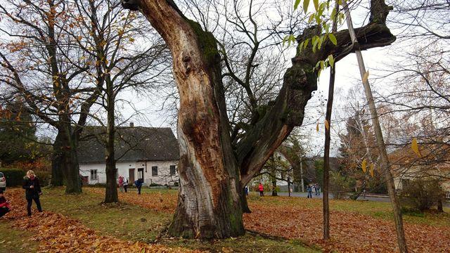 v parku Kaštanka je stovka stromů; foto L. Tomáš