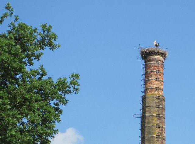 čápi pravidelně hnízdí na komíně v centru Lhotic