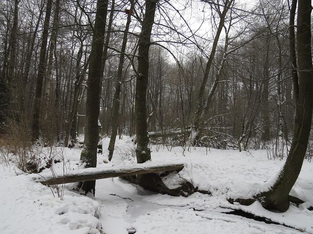zimní nálada u Smrčenského potoka; www.svatosi.cz