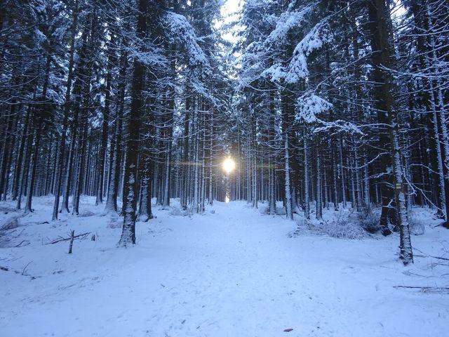 stále vzhůru za sluncem na nejvyšší vrchol Vysočiny; foto V. Veselá