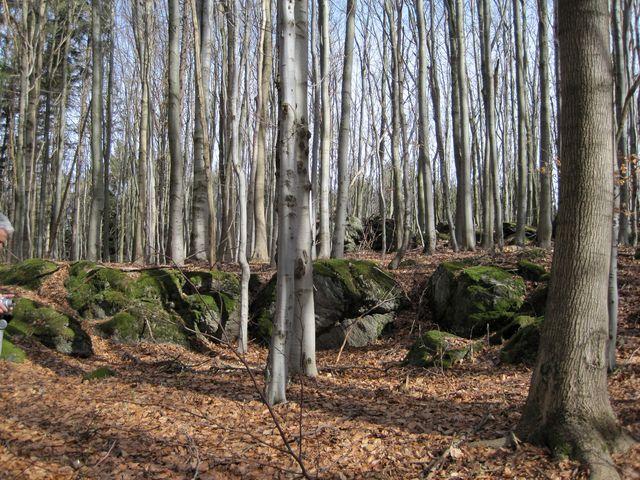 les na Velkém Špičáku