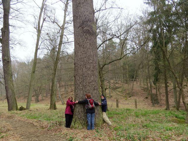 alej byla vysázena při vzniku lesoparku
