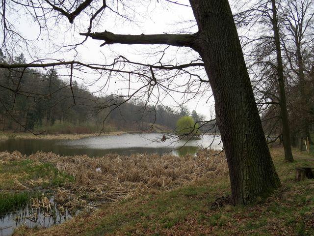 ostrůvky na rybníku Březina sloužily ptákům a zároveň vnášely romantický prvek do krajiny