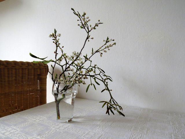 kvetoucí pláňka od břehů Oslavy - vedle i snítka ochmetu