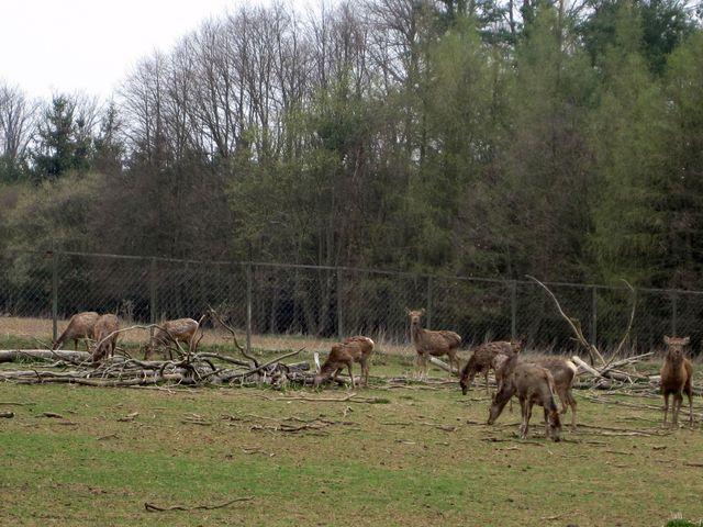 jelení obora u hájenky