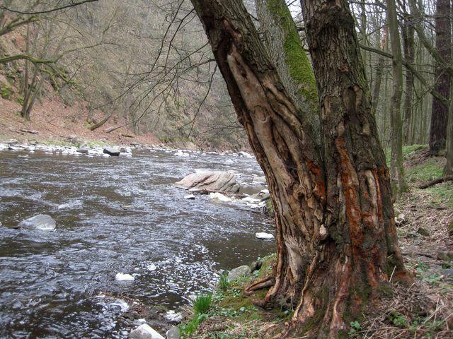 takhle poranily strom ledové kry