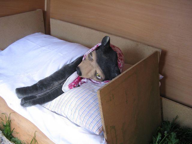 vlk spí a nehodlá opustit své lože - děti zvědavě a tiše nakukovaly; foto M. Bradová