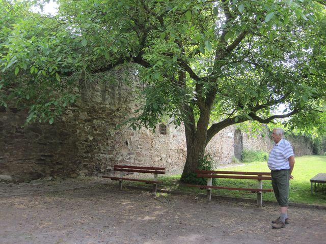 severní hradba bechyňského opevnění při pohledu z klášterní zahrady
