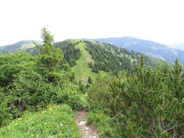 výhled ze svahu Rakytova na vrchol Tanečnice (1 462 m)