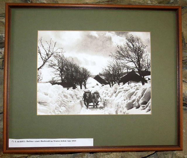 Bučina v zimě - fotografie F. Seidela