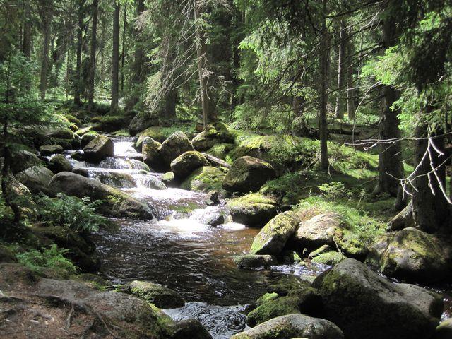 romantický Hamerský potok - pokaždé jiný, vždycky úchvatný